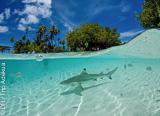 Un Best-of de la Polynésie française sous-marine - voyages adékua