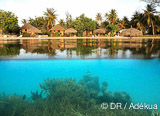 Jours 10 à 15 :  8 plongées inoubliables à Fakarava  - voyages adékua
