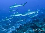 Jours 10 à 15 : 8 plongées exceptionnelles à Fakarava, dans les Tuamotus - voyages adékua