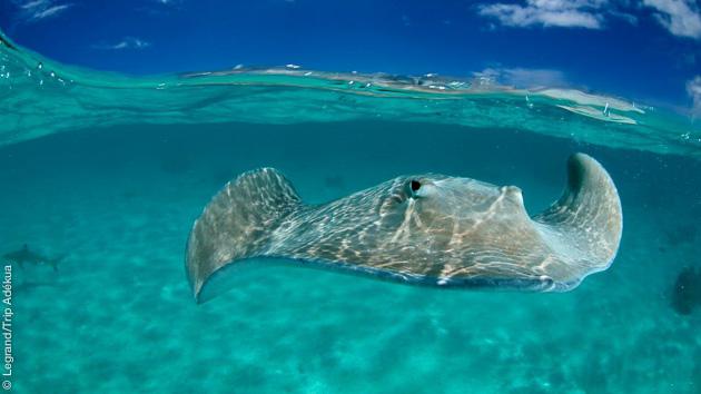 Un parcours plongée en Polynésie pour découvrir les récifs, tombants et une faune exceptionnelle