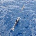 Avis séjour plongée en Martinique