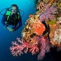 Commentaire de Justine sur son séjour plongée aux Philippines avec Olivier et Trip Adékua