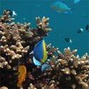 Commentaire de Benjamin sur son séjour plongée à Madagascar avec Tanguy et Trip Adékua