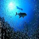 Avis séjour plongée à Sal au Cap Vert