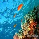 Avis séjour plongée aux Maldives