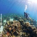 Avis séjour plongée au Mozambique