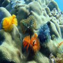 Avis séjour plongée à Panama