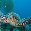 Avis séjour plongée à Madagascar dans l'Océan indien