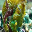 Séjour plongée à Raja Empat en Indonésie
