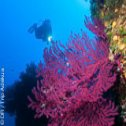 Avis séjour plongée à Ustica en Sicile