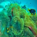 Avis séjour plongée à Tahiti en Polynésie française