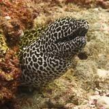 murène à Bali pendant une immersion sous-marine