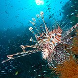 Commentaire Jean Claude sur ses vacances plongée à Bali avec Arnaud et Trip Adékua