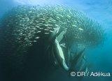 Avis séjour plongée en Afrique du Sud