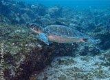 Avis séjour plongée au Cap Vert