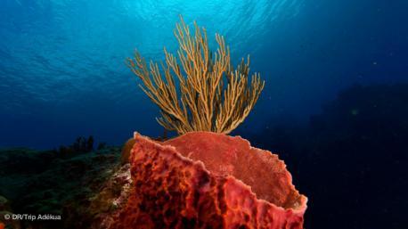 séjour plongée au Panama paradis de la faune sous marine dans les Caraibes