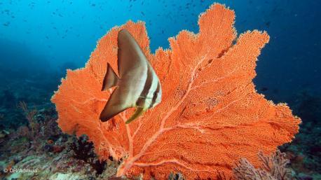 corail et poissons multicolores pour ce circuit plongée aux Maldives