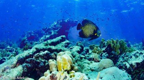 A la découverte des fonds marins du Belize