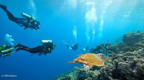 croisière plongée dans le surd de la mer rouge côté Egypte