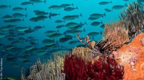 magnifiques fonds sous marins de Komodo en Indonésie