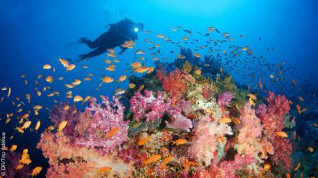 Une croisière plongée d'exception aux îles Fidji