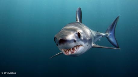 à la rencontre des requins sur ce safari plongée en Afrique du sud et Mozambique