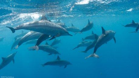 Découvrez les plus beaux spots de plongée de mer Rouge