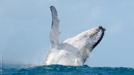 baleine à bosse à Madagascar