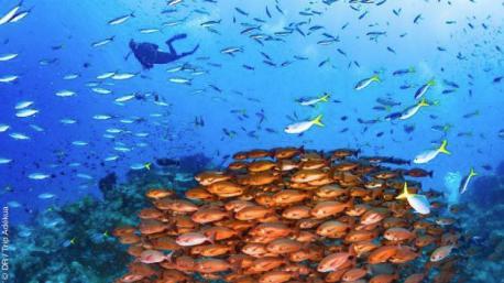 Magnifique séjour plongée dans les eaux de Papouasie Nouvelle Guinée
