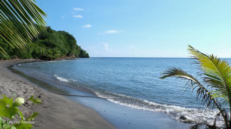 Votre séjour plongée à la Dominique avec plage et farniente au programme