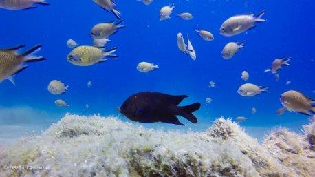 Découvrez les plus belles espèces marines des Canaries pendant votre séjour plongée