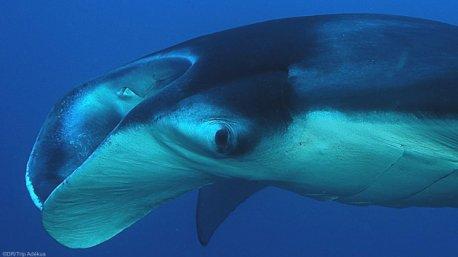 Plongez avec les plus belles espèces du Mozambique pendant votre séjour