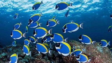 Des immersions exceptionnelles dans les fonds marins du Mozambique