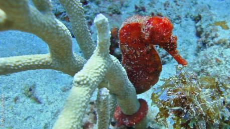 Vos guides diplômés vous feront découvrir le meilleur de la plongée à Tobago