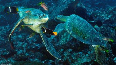 Votre séjour plongée à la découverte des trésors des Galapagos