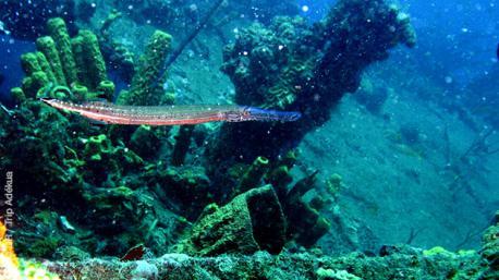 Combiné plongées et excursions à la Dominique