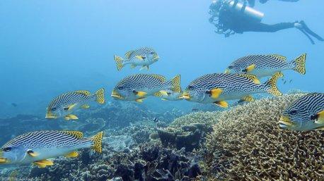 Votre séjour plongée sur l'île de Sulawesi en Indonésie