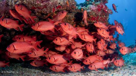 votre voyage plongée à Tahiti en Polynésie commence par une rencontre avec une faune d'une richesse folle