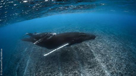 Plongées de rêves en Polynésie française, entre Tahiti, Bora Bora et Rangiroa