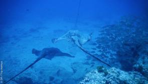 avis de Lionel sur son séjour plongée à Tenerife avec Dive Trip Adékua