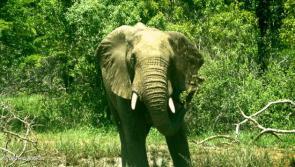 safari complet avec les big 5 en afrique du sud