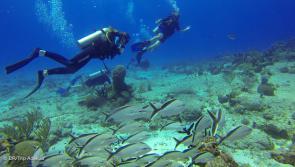 plonger en famille pendant votre voyage à Playa del Carmen