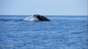 notre voyage à Madagscarpour voir des baleines