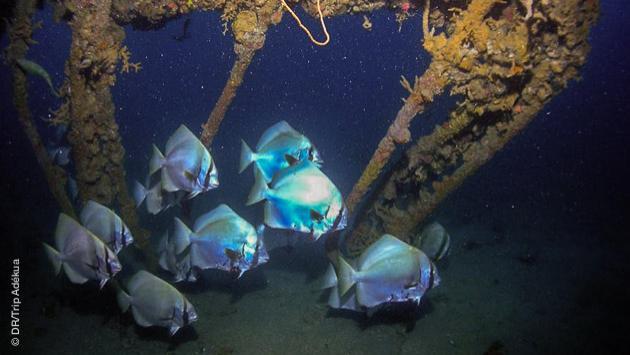 plonger sur épave aux Philippines