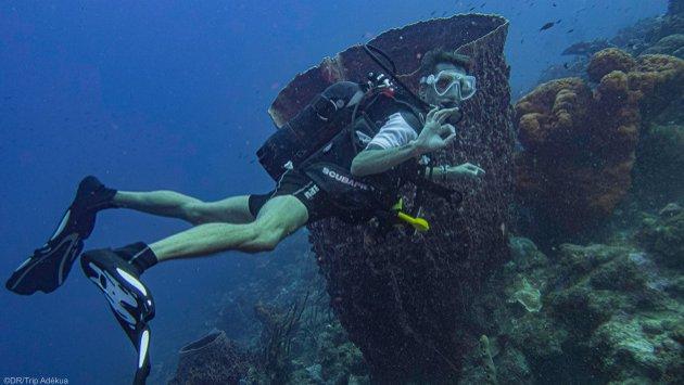 Des vacances plongée de rêve sur l'île de la Guadeloupe dans les Caraïbes
