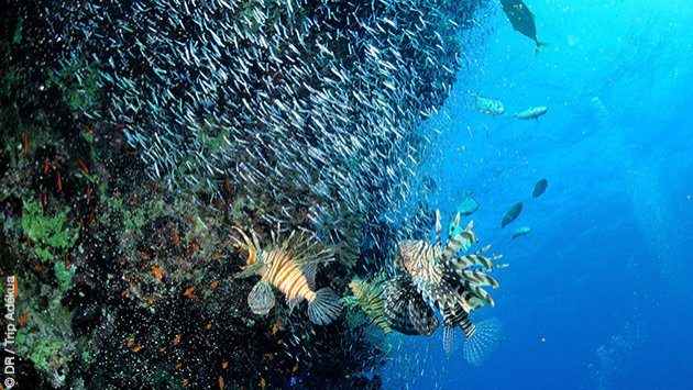 Séjour plongée à Safaga en Egypte