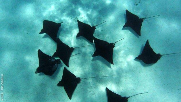 votre séjour snorkeling en Polynésie française