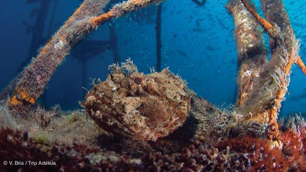 plongée sur épave en mer de Cortez au Mexique