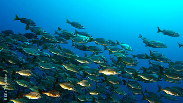 Pour découvrir les fonds marins de Gran Canaria, venez passer vos niveaux de plongée avec nous !